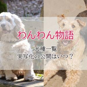 【わんわん物語】実写化の犬種!レディー・トランプは?公開日はいつ?