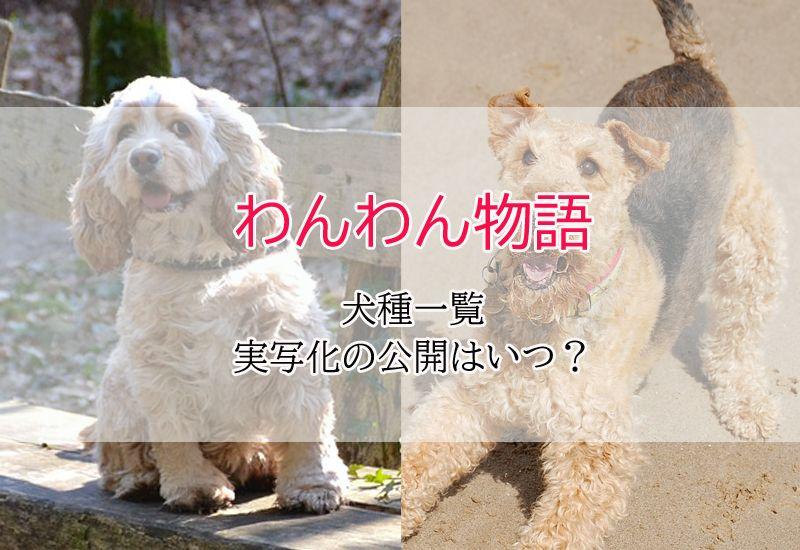 犬種 わんわん物語 実写 cdn.snowboardermag.com :